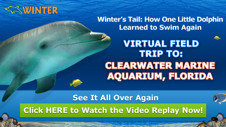 Winter's Tail: A Virtual Field Trip | Scholastic