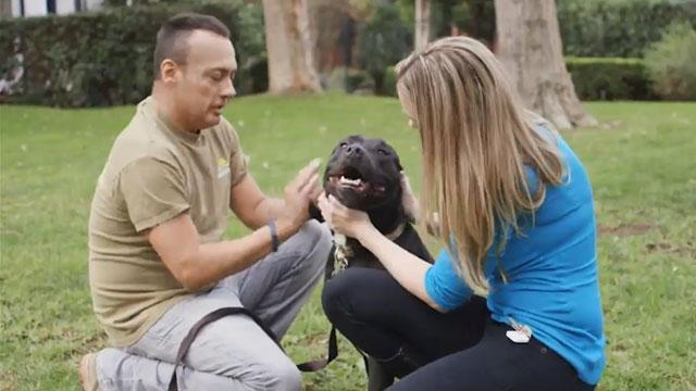 Pets for Vets: Starting a Nonprofit to Achieve Charitable Goals
