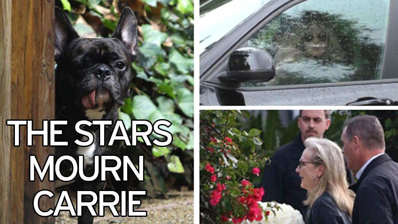 Carrie Fishers Beloved Dog Gary Greets Guests At Private Memorial