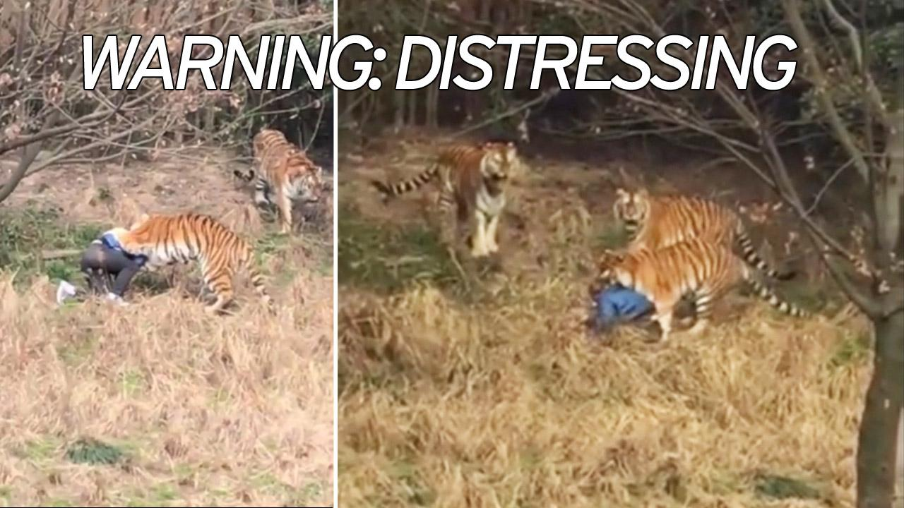 Tourist Mauled Death Tigers Front Wife